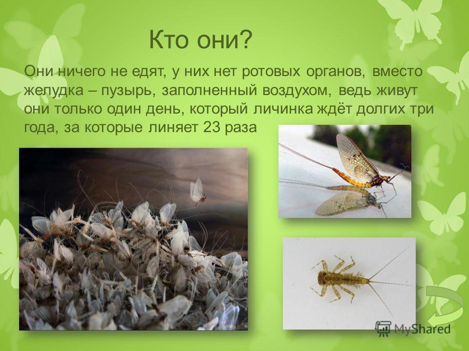 Назовите отличия личинки стрекозы от взрослого насекомого