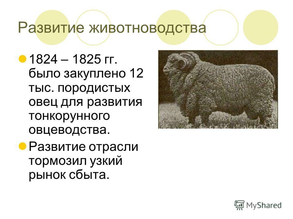 Развитие животноводства 1824 – 1825 гг. было закуплено 12 тыс. породистых овец для развития тонкорунного овцеводства. Развитие отрасли тормозил узкий рынок сбыта.