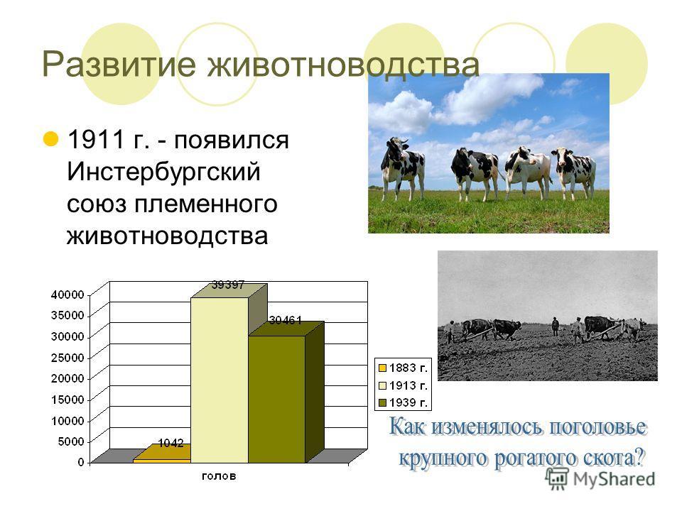 1911 г. - появился Инстербургский союз племенного животноводства Развитие животноводства