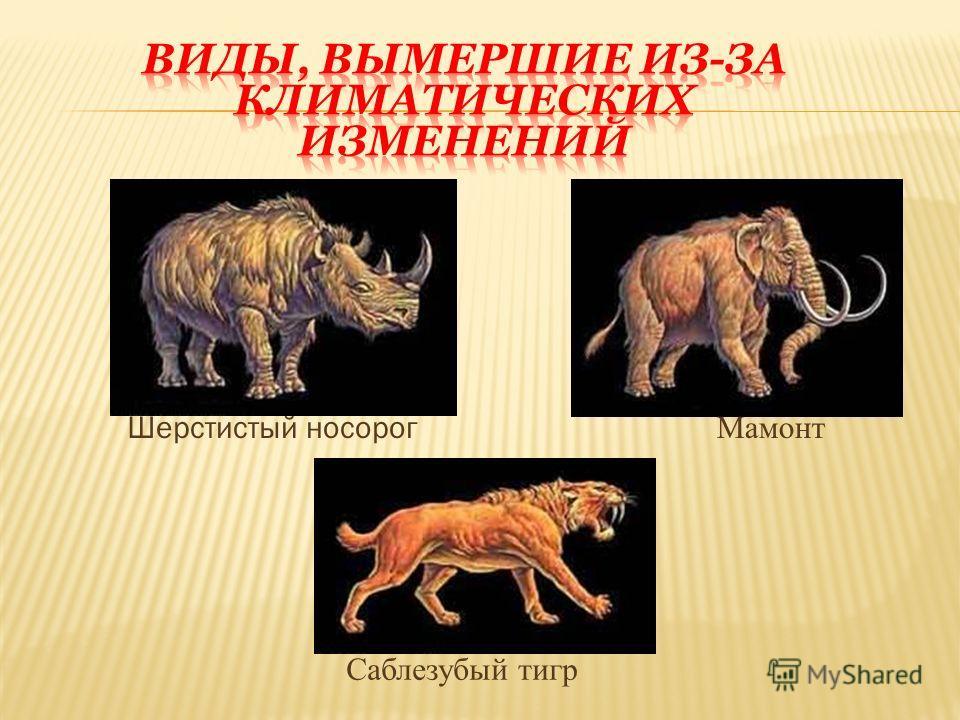 Шерстистый носорог Мамонт Саблезубый тигр