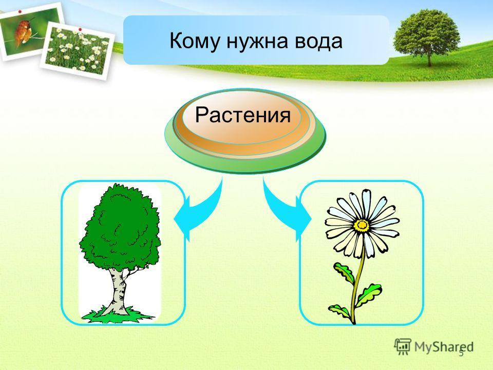 Растения Кому нужна вода 5