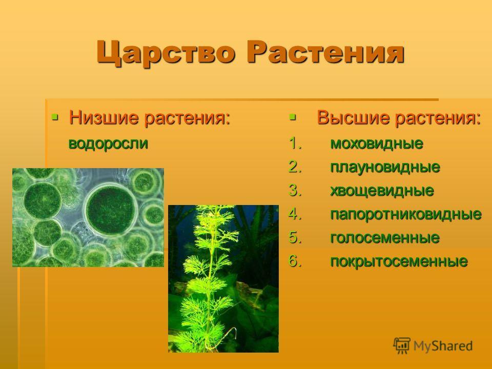 Царство Растения Низшие растения: Низшие растения: водоросли водоросли Высшие растения: Высшие растения: 1. моховидные 2. плауновидные 3. хвощевидные 4. папоротниковидные 5. голосеменные 6. покрытосеменные