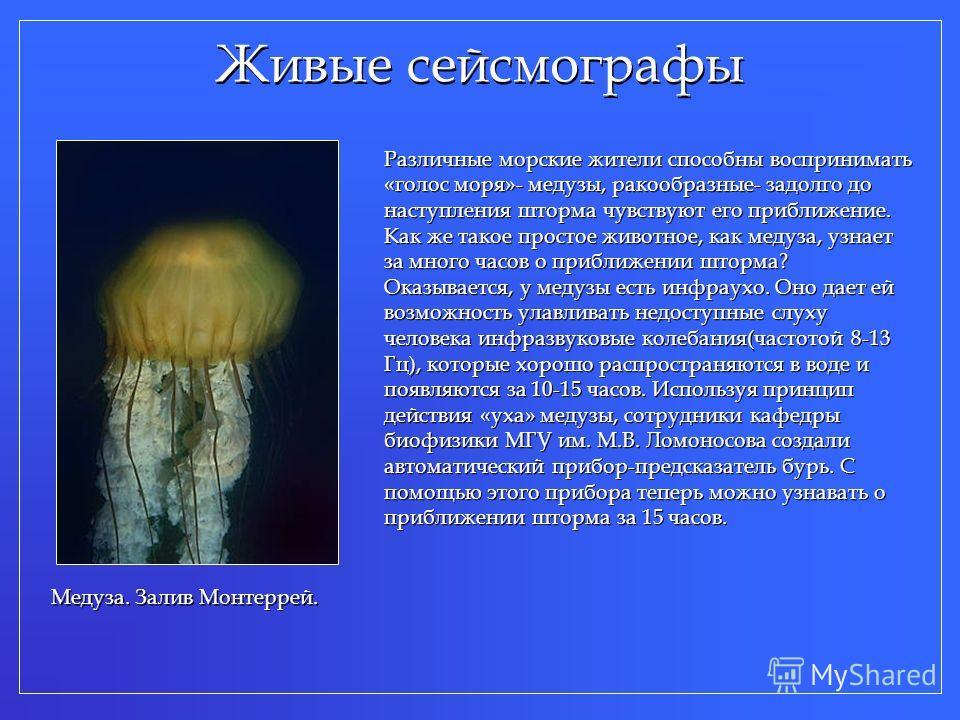 Живые сейсмографы Различные морские жители способны воспринимать «голос моря»- медузы, ракообразные- задолго до наступления шторма чувствуют его приближение. Как же такое простое животное, как медуза, узнает за много часов о приближении шторма? Оказы
