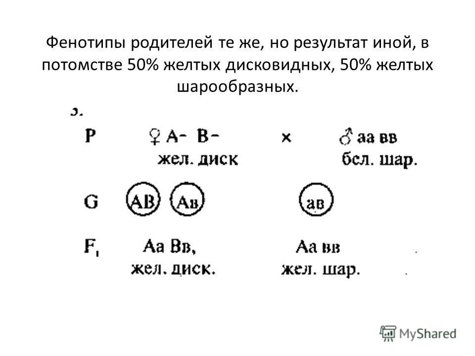 Фенотипы родителей те же, но результат иной, в потомстве 50% желтых дисковидных, 50% желтых шарообразных.