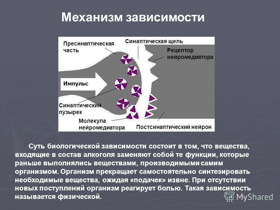Импульс Синаптический пузырек Пресинаптическая часть Рецептор нейромедиатора Молекула нейромедиатора Синаптическая щель Постсинаптический нейрон Механизм зависимости Суть биологической зависимости состоит в том, что вещества, входящие в состав алкого