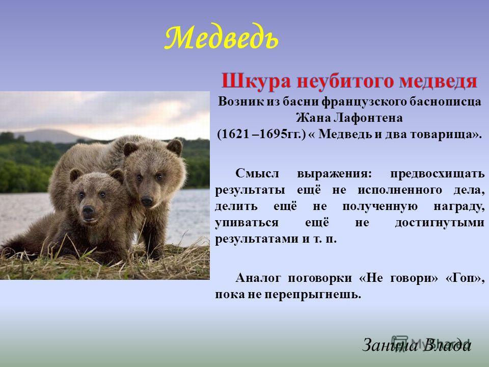 Медведь Занина Влада