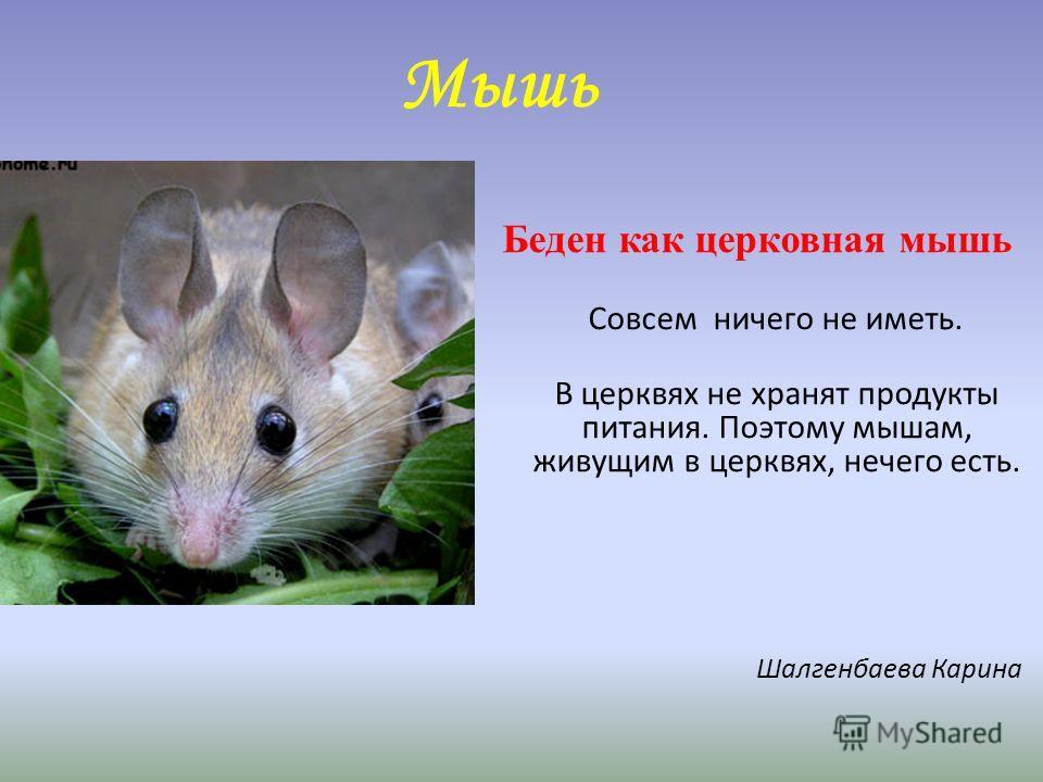 Мышь Беден как церковная мышь Совсем ничего не иметь. В церквях не хранят продукты питания. Поэтому мышам, живущим в церквях, нечего есть. Шалгенбаева Карина