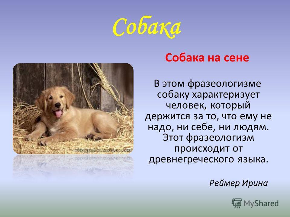 Собака Собака на сене В этом фразеологизме собаку характеризует человек, который держится за то, что ему не надо, ни себе, ни людям. Этот фразеологизм происходит от древнегреческого языка. Реймер Ирина