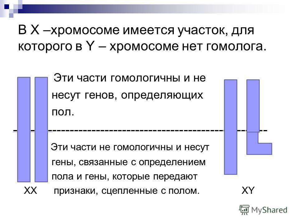 В Х –хромосоме имеется участок, для которого в Y – хромосоме нет гомолога. Эти части гомологичны и не несут генов, определяющих пол. ---------------------------------------------------------- - Эти части не гомологичны и несут гены, связанные с опред