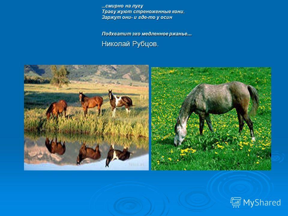 ...смирно на лугу Траву жуют стреноженные кони. Заржут они- и где-то у осин Подхватит эхо медленное ржанье... Николай Рубцов.