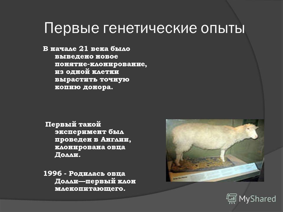 Первые генетические опыты В начале 21 века было выведено новое понятие-клонирование, из одной клетки вырастить точную копию донора. Первый такой эксперимент был проведен в Англии, клонирована овца Долли. 1996 - Родилась овца Доллипервый клон млекопит