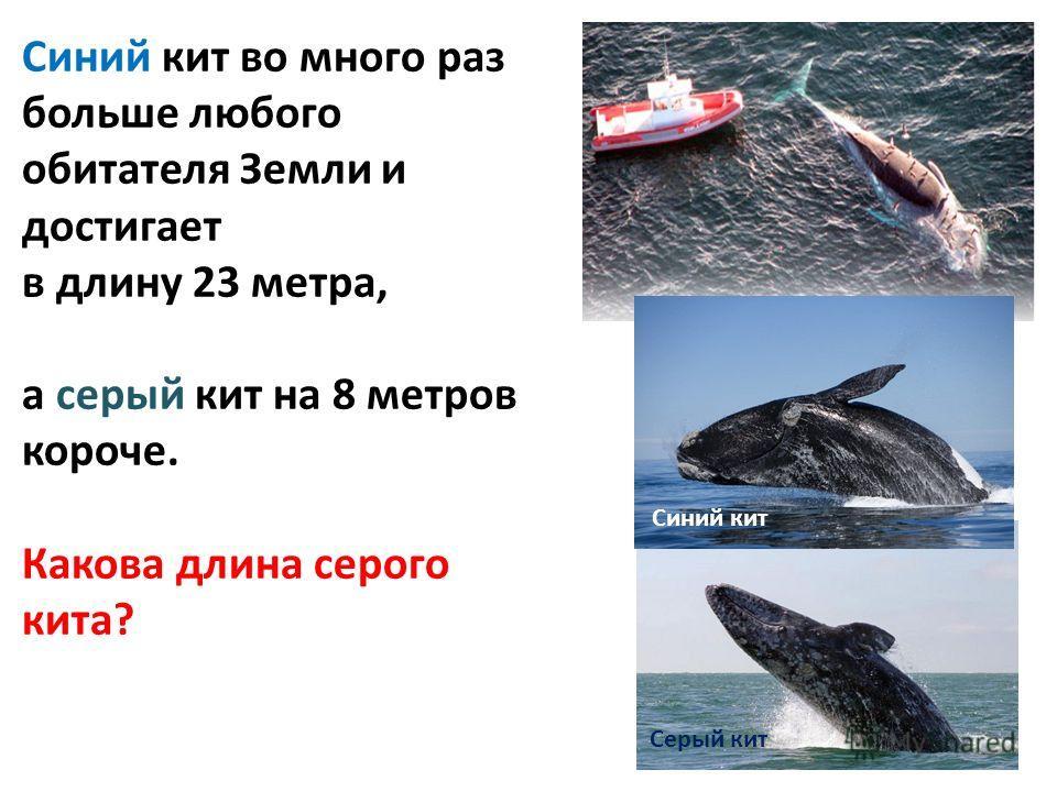 Синий кит Серый кит Синий кит во много раз больше любого обитателя Земли и достигает в длину 23 метра, а серый кит на 8 метров короче. Какова длина серого кита?