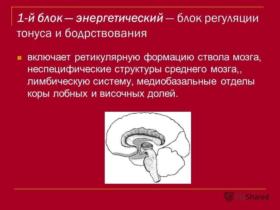 1-й блок энергетический блок регуляции тонуса и бодрствования включает ретикулярную формацию ствола мозга, неспецифические структуры среднего мозга,, лимбическую систему, медиобазальные отделы коры лобных и височных долей.