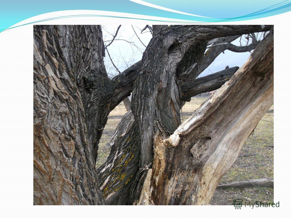 Путь к роднику через рощу Древних исполинов.
