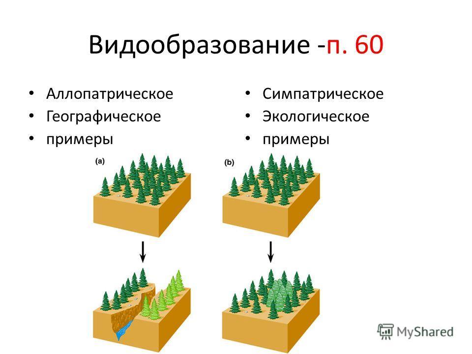 Видообразование -п. 60 Аллопатрическое Географическое примеры Симпатрическое Экологическое примеры
