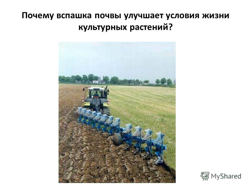 Почему вспашка почвы улучшает условия жизни культурных растений?