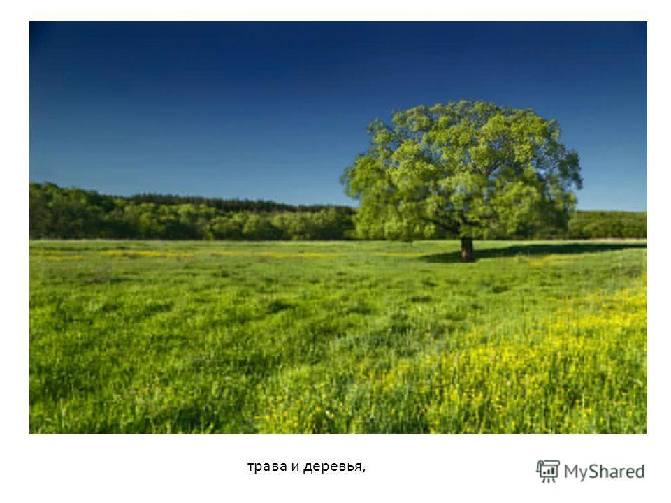 трава и деревья,