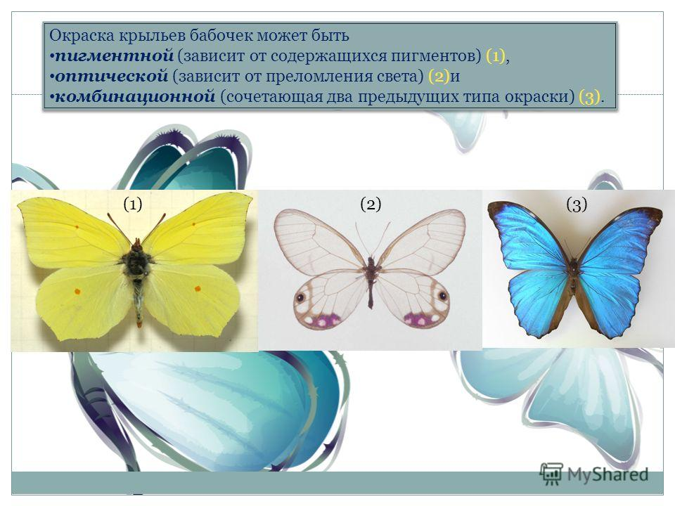 Окраска крыльев бабочек может быть пигментной (зависит от содержащихся пигментов) (1), оптической (зависит от преломления света) (2)и комбинационной (сочетающая два предыдущих типа окраски) (3). Окраска крыльев бабочек может быть пигментной (зависит