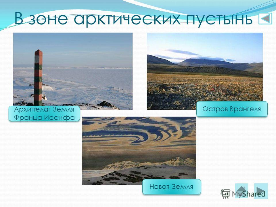 В зоне арктических пустынь Архипелаг Земля Франца Иосифа Остров Врангеля Новая Земля