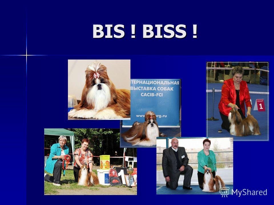 BIS ! BISS !