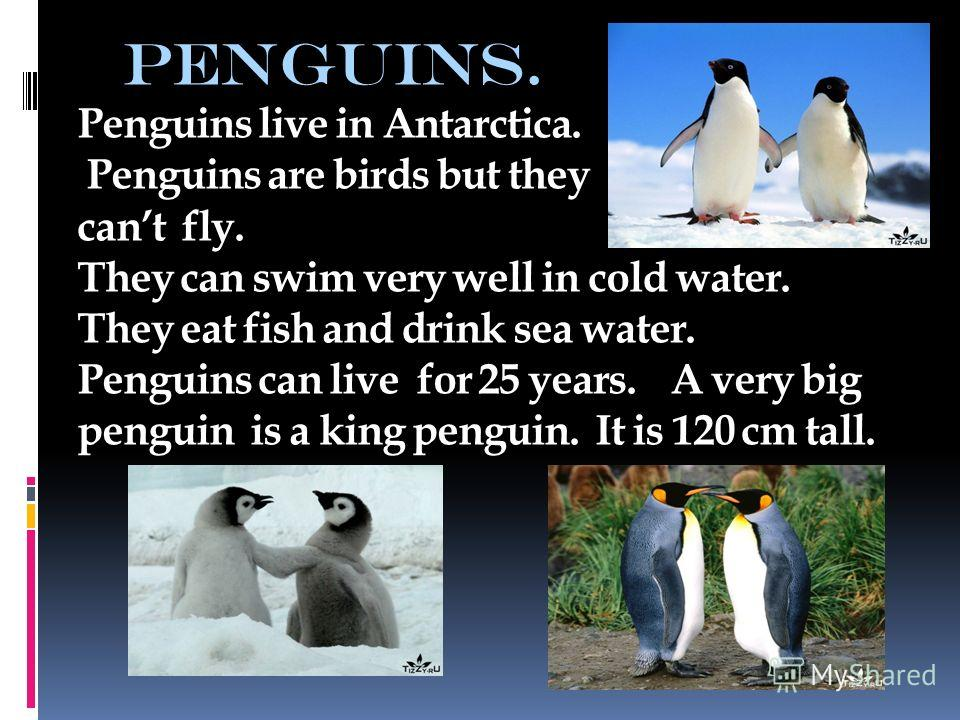 penguins. Penguins live in Antarctica. Penguins are birds but they cant fly. They can swim very well in cold water. They eat fish and drink sea water. Penguins can live for 25 years. A very big penguin is a king penguin. It is 120 cm tall.