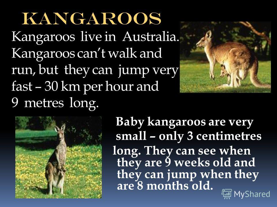 kangaroos Kangaroos live in Australia. Kangaroos cant walk and run, but they can jump very fast – 30 km per hour and 9 metres long. Baby kangaroos are very small – only 3 centimetres long. They can see when they are 9 weeks old and they can jump when
