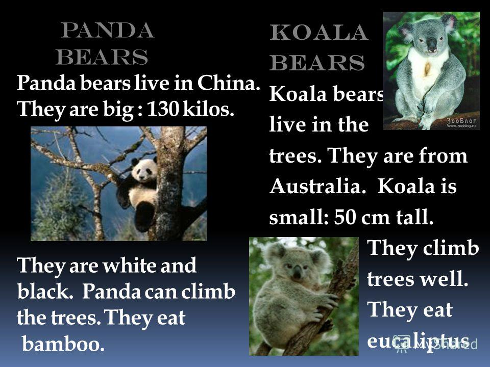 Panda Bears Panda bears live in China. They are big : 130 kilos. They are white and black. Panda can climb the trees. They eat bamboo. Koala bears Koala bears live in the trees. They are from Australia. Koala is small: 50 cm tall. They climb trees we