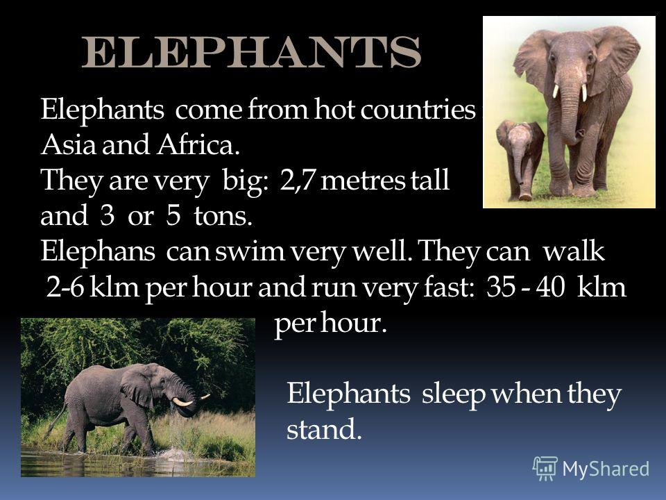 Elephants Elephants come from hot countries : Asia and Africa. They are very big: 2,7 metres tall and 3 or 5 tons. Elephans can swim very well. They can walk 2-6 klm per hour and run very fast: 35 - 40 klm per hour. Elephants sleep when they stand.