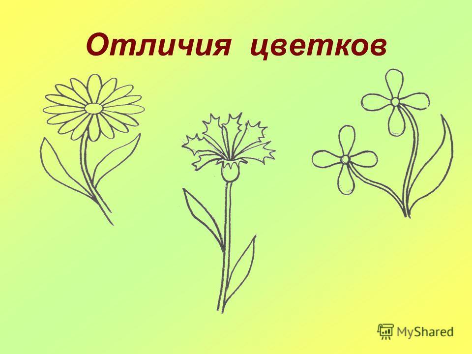 Из чего состоит цветок
