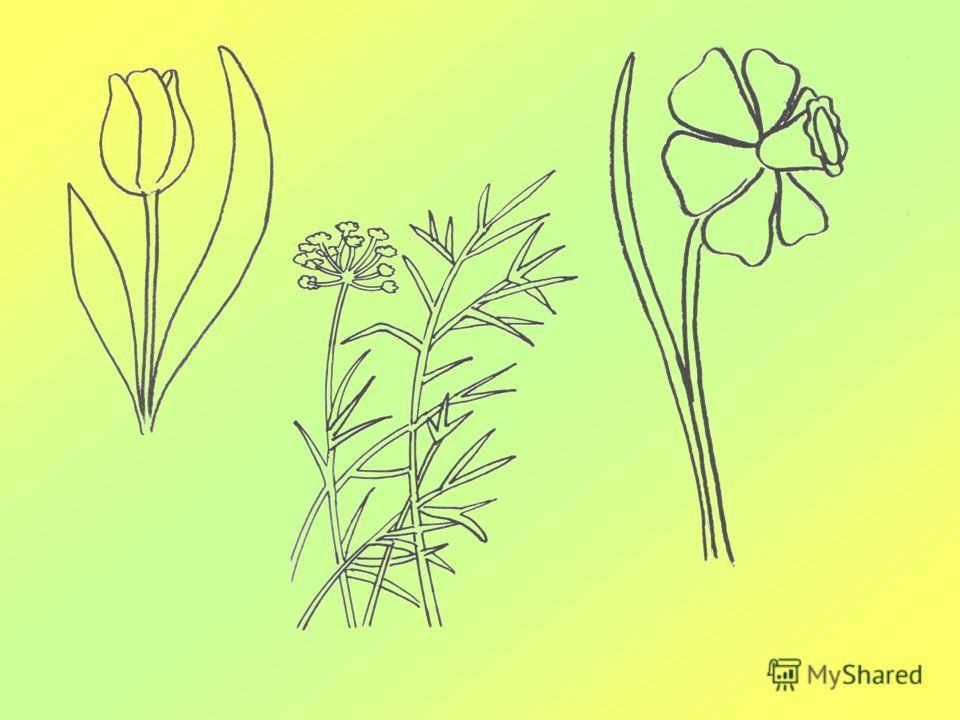 Отличия цветков