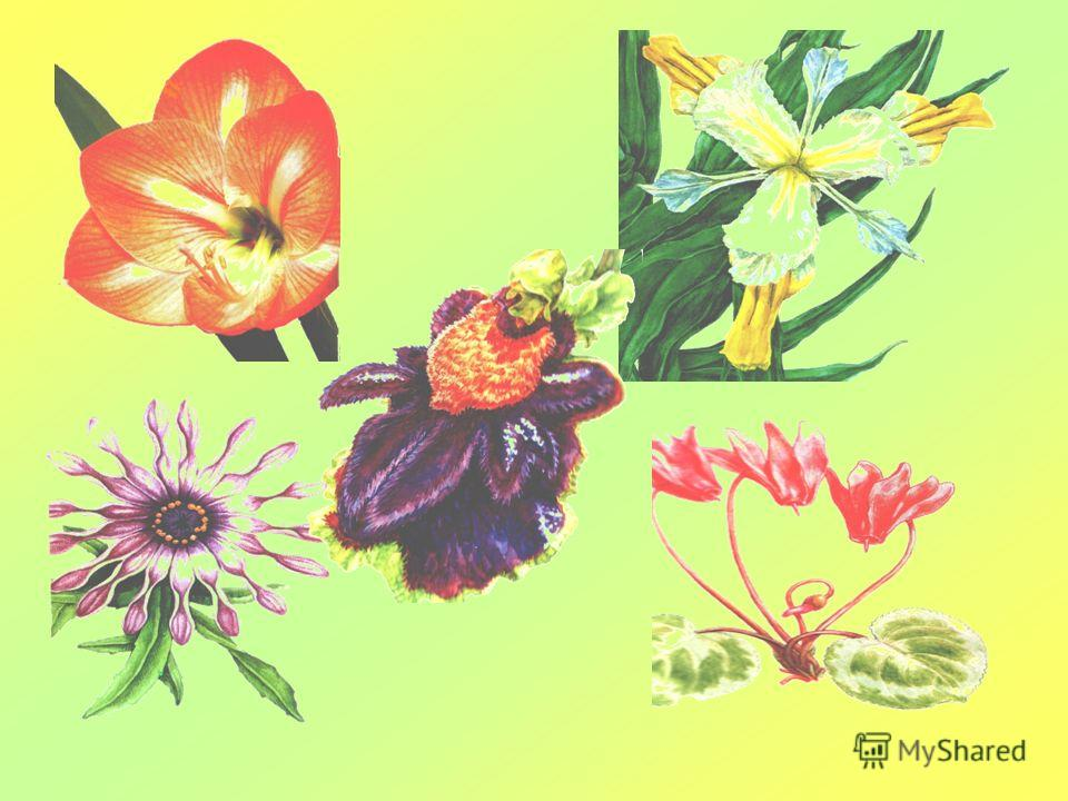 Цветы, созданные природой
