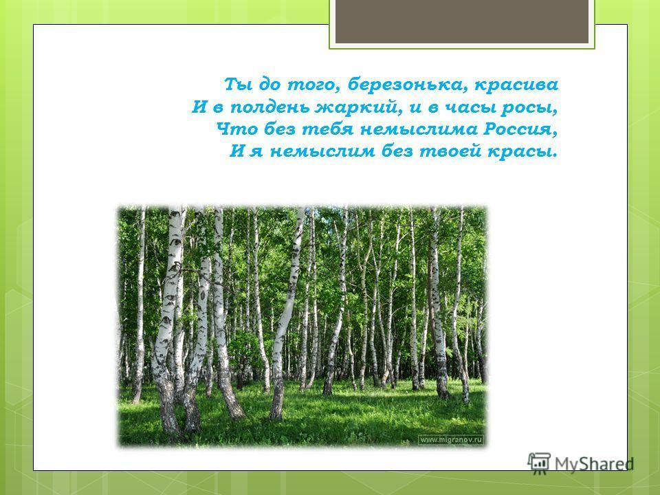 Ты до того, березонька, красива И в полдень жаркий, и в часы росы, Что без тебя немыслима Россия, И я немыслим без твоей красы.
