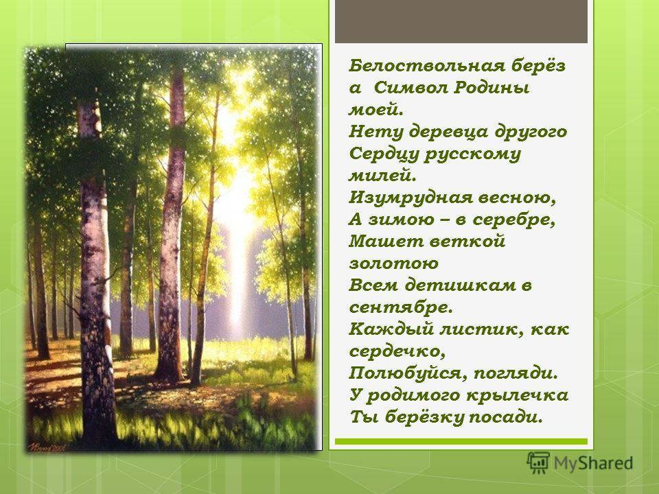 Белоствольная берёз а Символ Родины моей. Нету деревца другого Сердцу русскому милей. Изумрудная весною, А зимою – в серебре, Машет веткой золотою Всем детишкам в сентябре. Каждый листик, как сердечко, Полюбуйся, погляди. У родимого крылечка Ты берёз