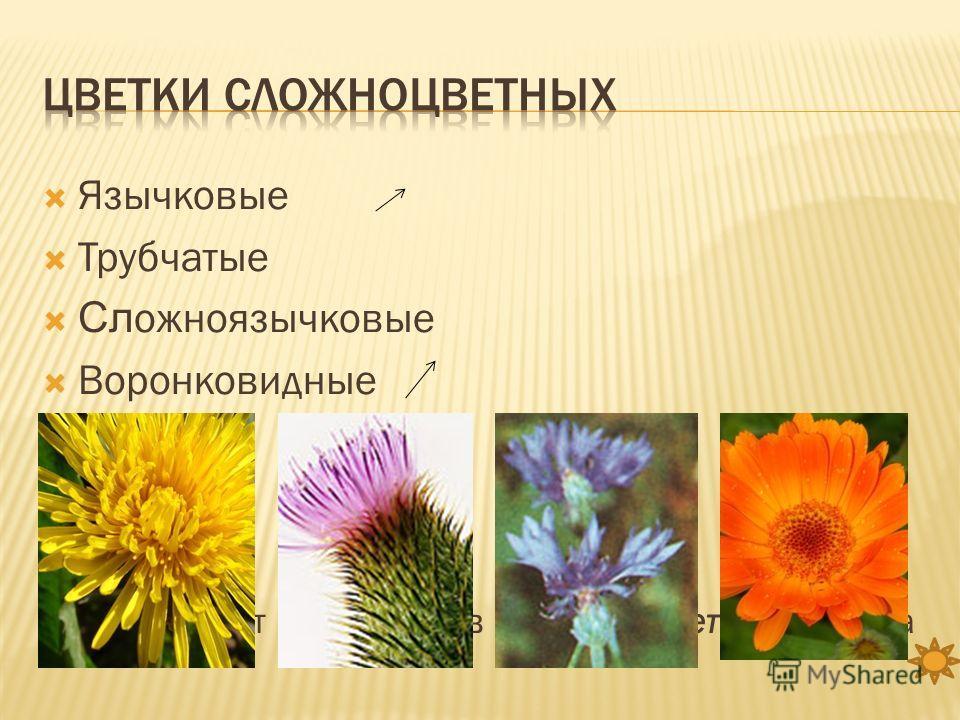 Язычковые Трубчатые Сл ожноязычковые Воронковидные Все они могут находиться в одном соцветии корзинка