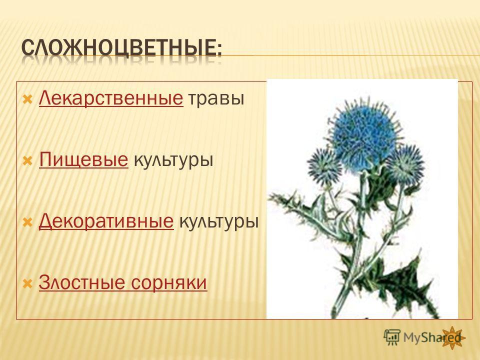Лекарственные травы Лекарственные Пищевые культуры Пищевые Декоративные культуры Декоративные Злостные сорняки