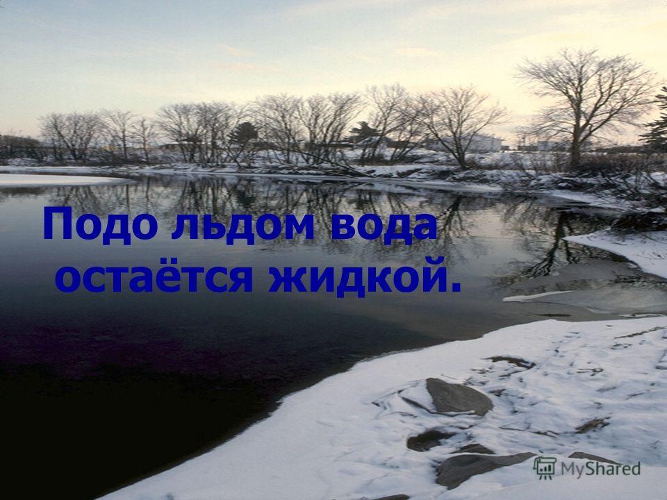 Подо льдом вода остаётся жидкой.
