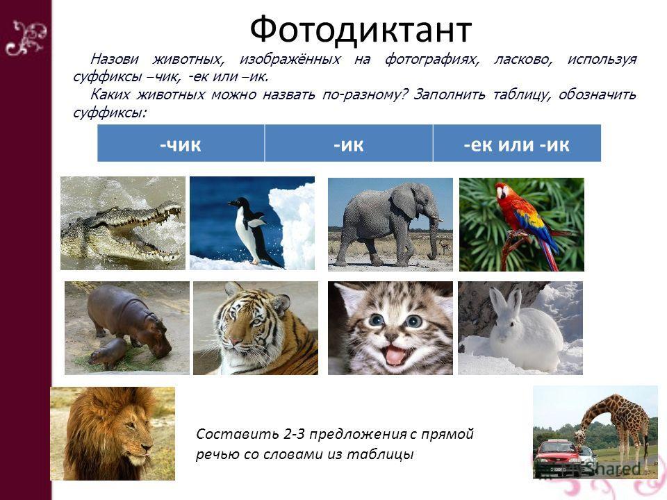 Фотодиктант -чик-ик-ек или -ик Назови животных, изображённых на фотографиях, ласково, используя суффиксы – чик, -ек или – ик. Каких животных можно назвать по-разному? Заполнить таблицу, обозначить суффиксы: Составить 2-3 предложения с прямой речью со