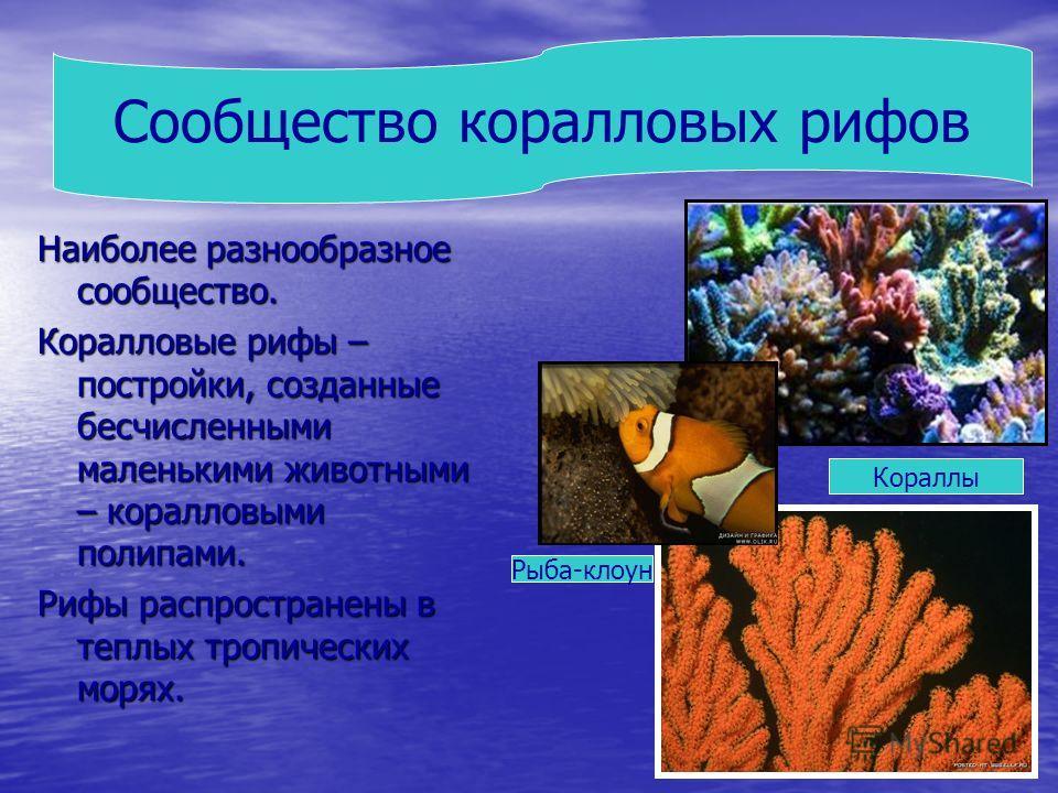 Наиболее разнообразное сообщество. Коралловые рифы – постройки, созданные бесчисленными маленькими животными – коралловыми полипами. Рифы распространены в теплых тропических морях. Сообщество коралловых рифов Кораллы Рыба-клоун