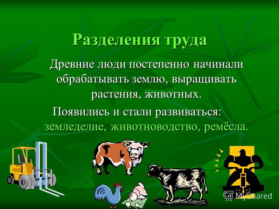 Разделения труда Древние люди постепенно начинали обрабатывать землю, выращивать растения, животных. Появились и стали развиваться: земледелие, животноводство, ремёсла.