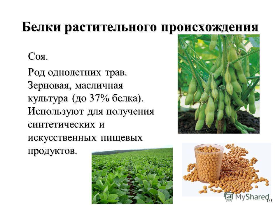 Белки растительного происхождения Соя. Соя. Род однолетних трав. Зерновая, масличная культура (до 37% белка). Используют для получения синтетических и искусственных пищевых продуктов. Род однолетних трав. Зерновая, масличная культура (до 37% белка).