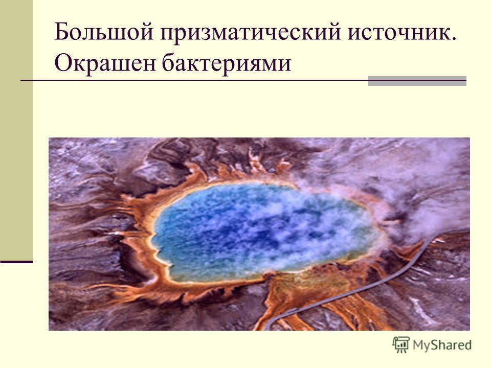 Большой призматический источник. Окрашен бактериями