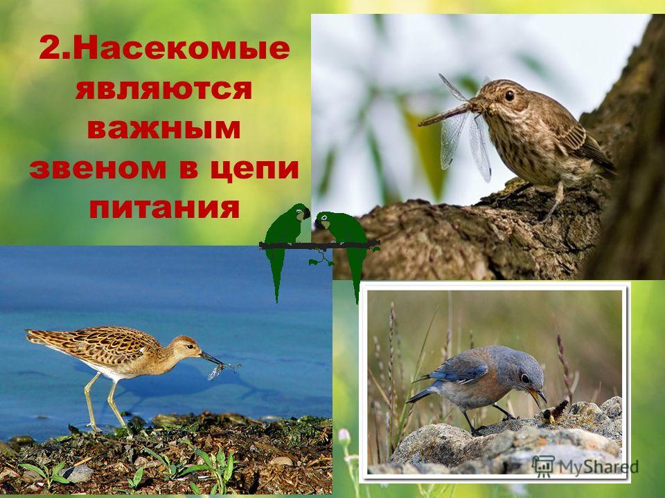 2.Насекомые являются важным звеном в цепи питания