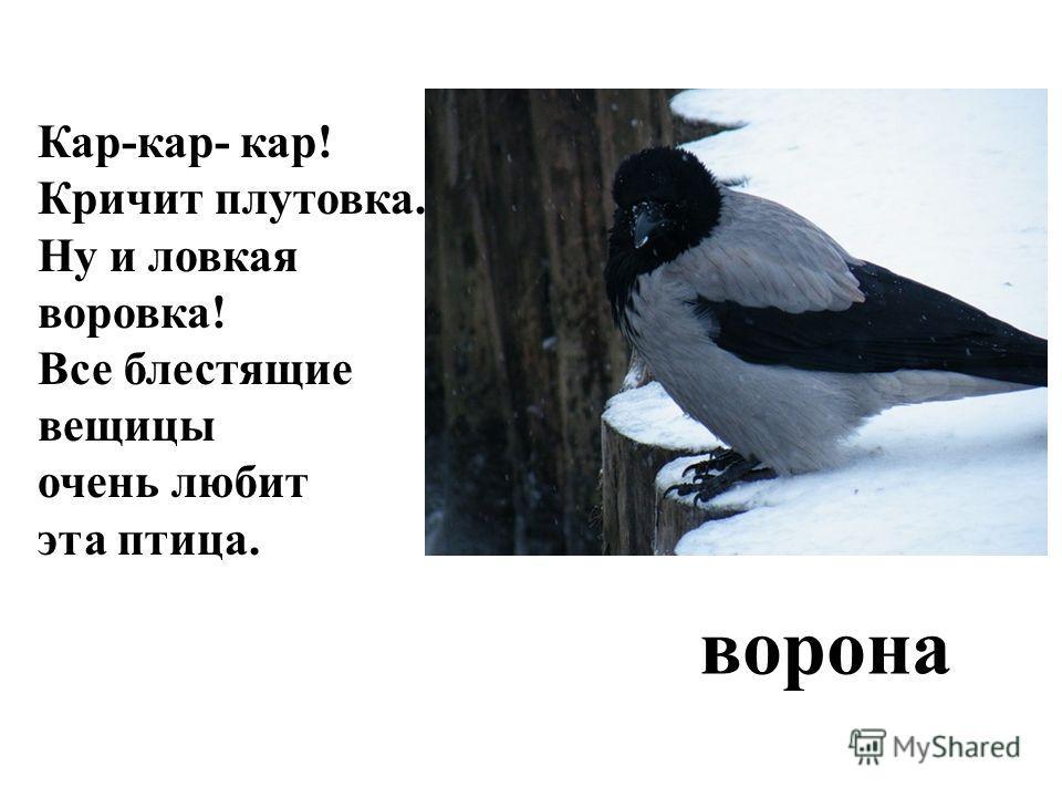 Кар-кар- кар! Кричит плутовка. Ну и ловкая воровка! Все блестящие вещицы очень любит эта птица. ворона