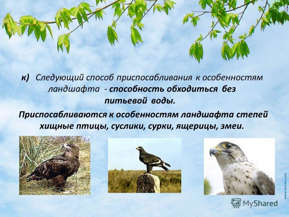 к) Следующий способ приспосабливания к особенностям ландшафта - способность обходиться без питьевой воды. Приспосабливаются к особенностям ландшафта степей хищные птицы, суслики, сурки, ящерицы, змеи.