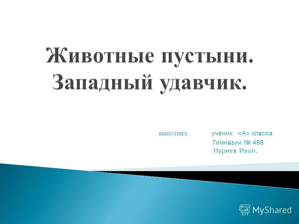 выполнил : ученик «А» класса Гимназии 498 Нуриев Иван.