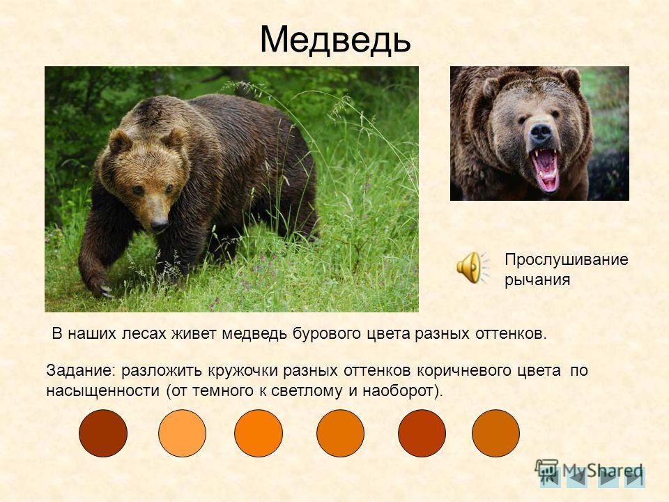 Медведь Прослушивание рычания В наших лесах живет медведь бурового цвета разных оттенков. Задание: разложить кружочки разных оттенков коричневого цвета по насыщенности (от темного к светлому и наоборот).