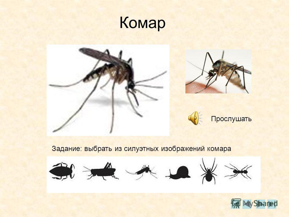 Комар Прослушать Задание: выбрать из силуэтных изображений комара