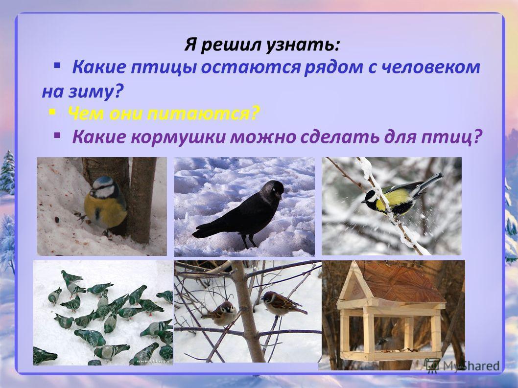Я решил узнать: Какие птицы остаются рядом с человеком на зиму? Чем они питаются? Какие кормушки можно сделать для птиц?