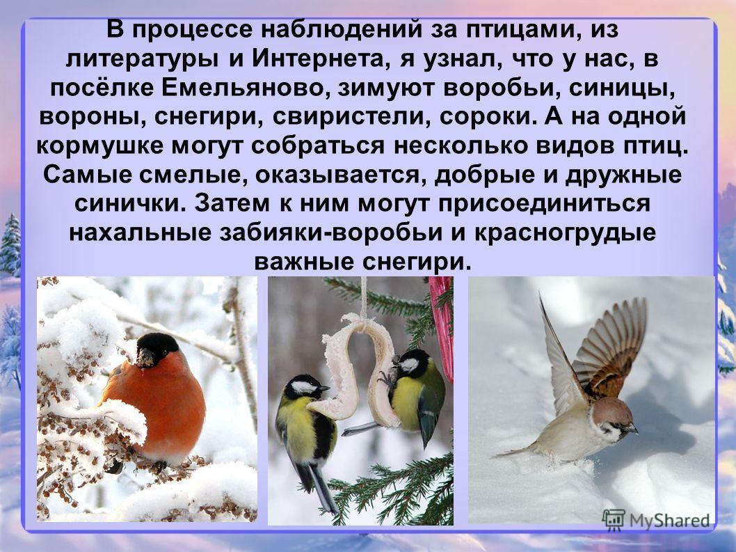 В процессе наблюдений за птицами, из литературы и Интернета, я узнал, что у нас, в посёлке Емельяново, зимуют воробьи, синицы, вороны, снегири, свиристели, сороки. А на одной кормушке могут собраться несколько видов птиц. Самые смелые, оказывается, д