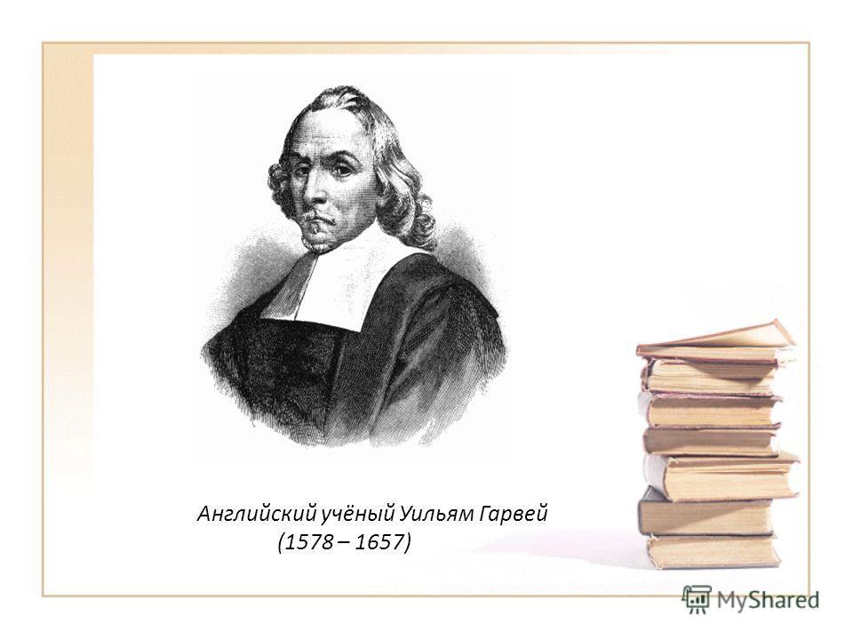 Английский учёный Уильям Гарвей (1578 – 1657)